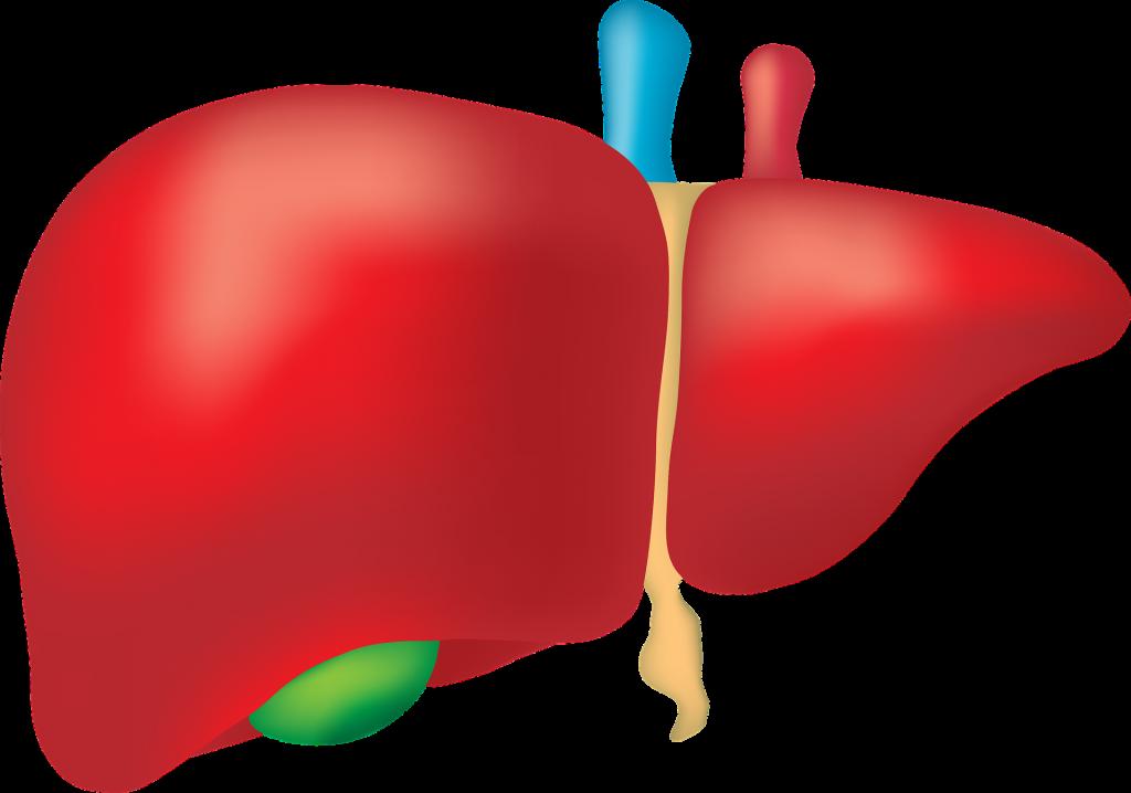 fibroscan czyli elastografia